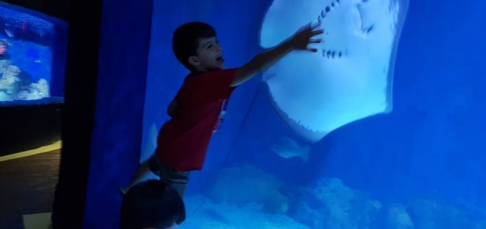hurghada grand aquarium 78
